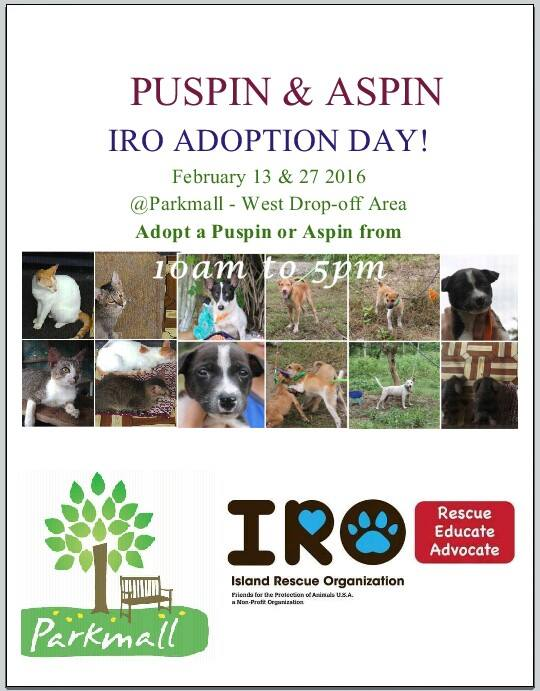 IRO Adoption Day - February 2016